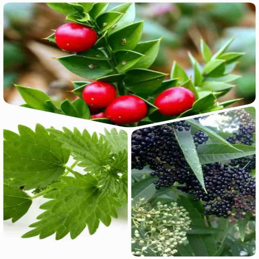 دانلود پاورپوینت چند نوع گیاه بومی گیلان