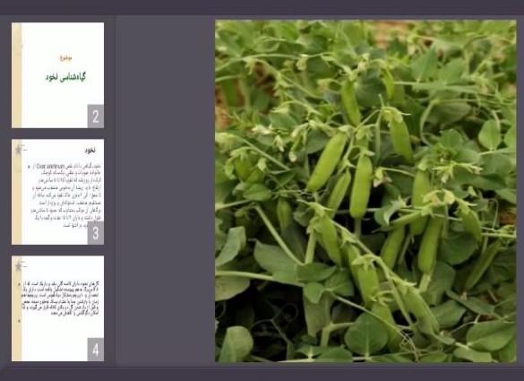 دانلود پاورپوینت گیاهشناسی نخود