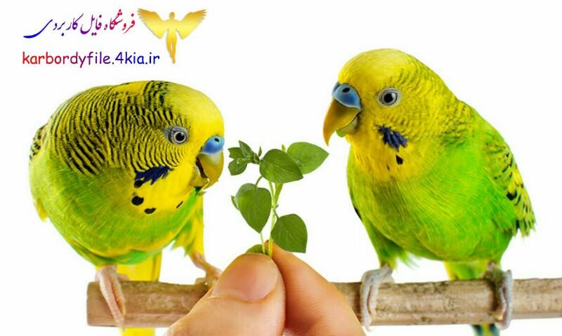 کتاب هنر سخنگو کردن مرغ عشق