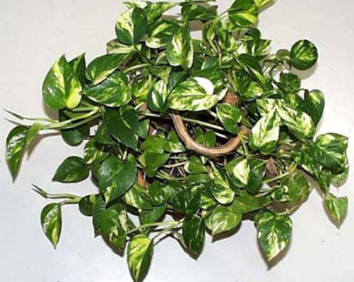 طرح توجیهی پرورش گل و گیاه در گلخانه (پیتوس و نخل