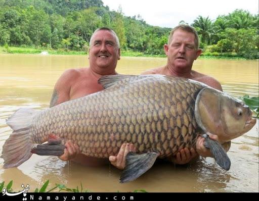 طرح کامل توجیهی پرورش متراکم ماهیان گرمابی (
