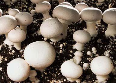 کتاب پرورش قارچ در منزل