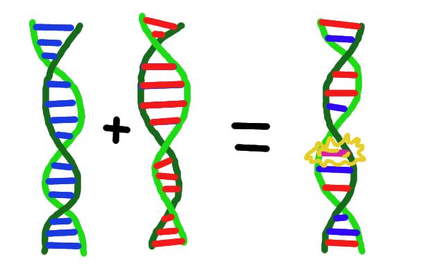الگوريتم ژنتيک و حل مساله TSP