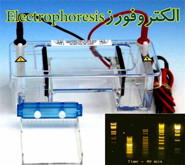 پاورپوینت با موضوع الکتروفورز Electrophoresis