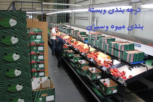 دانلود نحوه درجه بندی و بسته بندی میوه و سبزی وخصوصیات آن ها pdf
