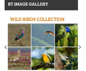 گالری تصاویر BT Image Gallery