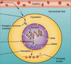 دانلود جزوه بیوشیمی هورمون (منابع علوم پایه)