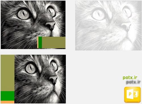قالب گربه سانان
